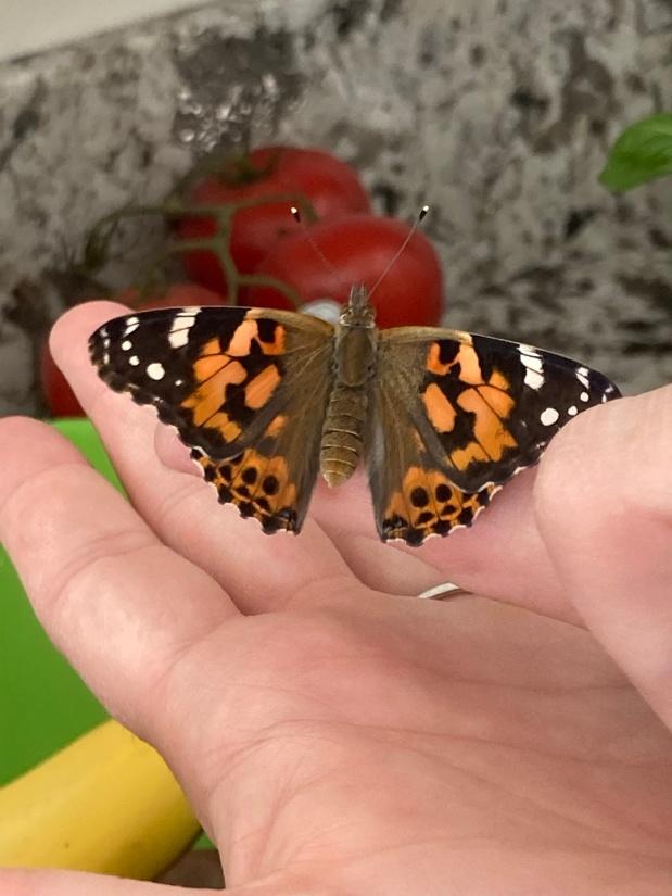 A Tale of TwoButterflies